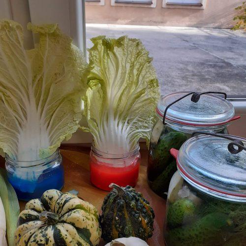 Leśnych Ludków warzywne eksperymenty