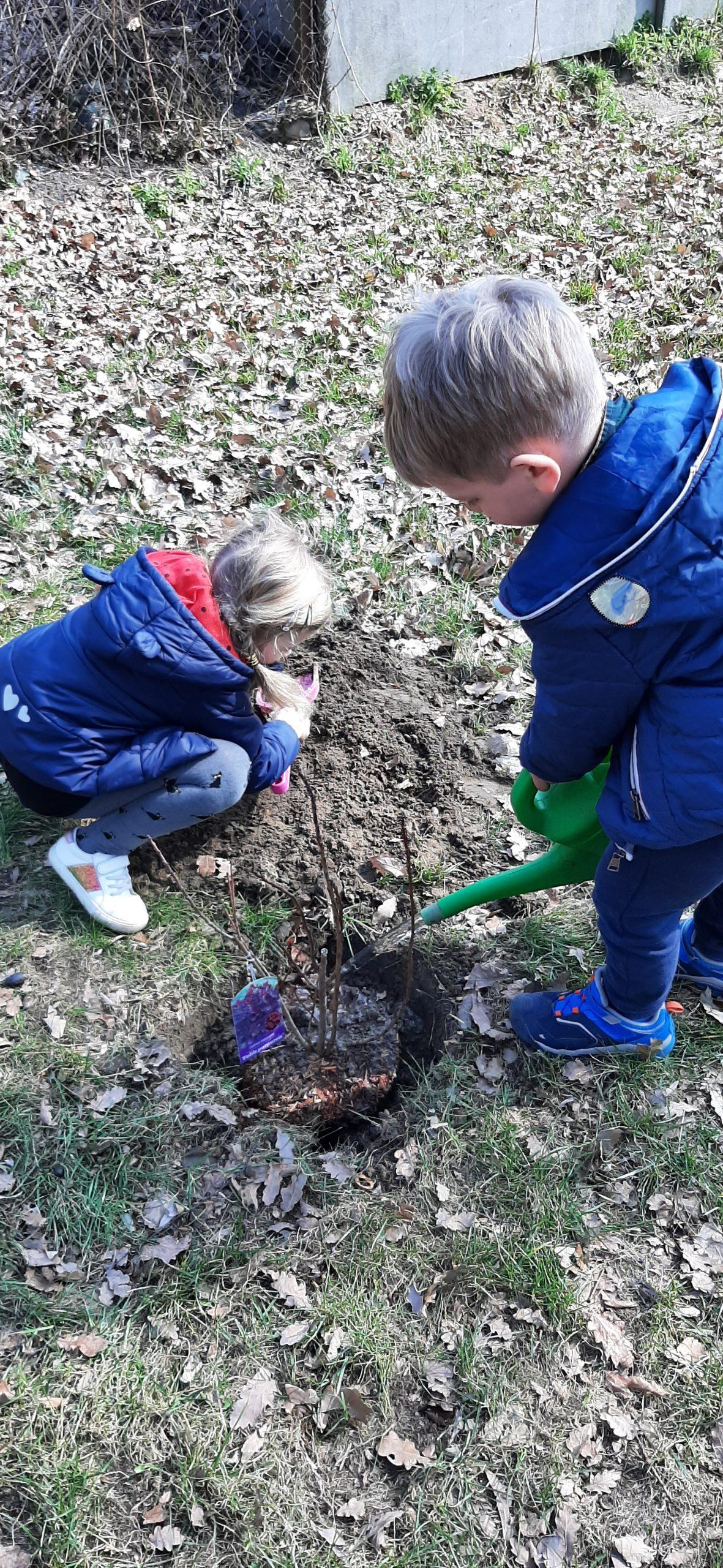 Sadzimy drzewa i krzewy
